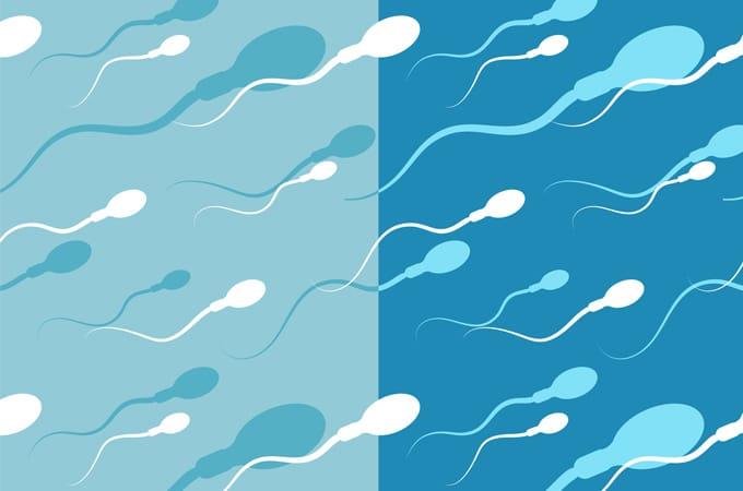 You when lose much sperm what happens too Semen retention: