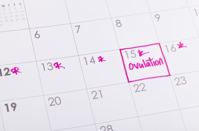 Not Ovulating? Dr. Yazigi Explains When it's Time to Seek Help